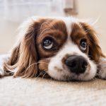 Ihren Hund helfen abkühlen mit Spielzeug und Eiscreme